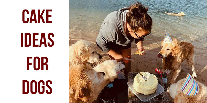 6 Cake Ideas For Dogs